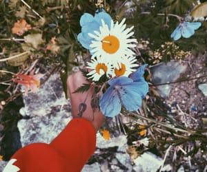 aesthetic, beauty, and daisy image