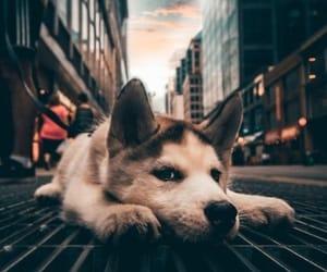 dog, animal, and city image