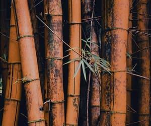 wallpaper, bamboo, and nature image