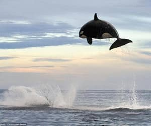 sea, ocean, and animal image