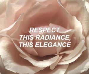 quotes, rose, and elegance image