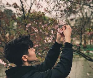 aesthetic, black, and blossom image