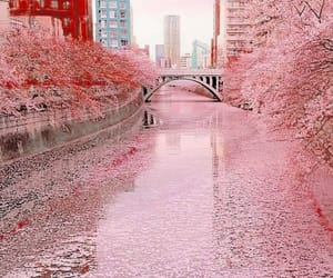 aesthetic, aesthetics, and cherry blossoms image