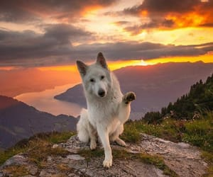 dog, adventure, and travel image