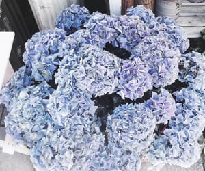 flowers and blue image