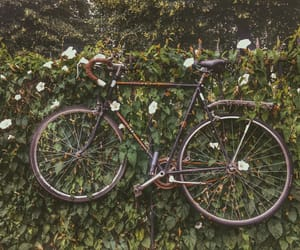 bike, flowers, and green image