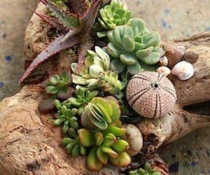 nature, sea shells, and plants image