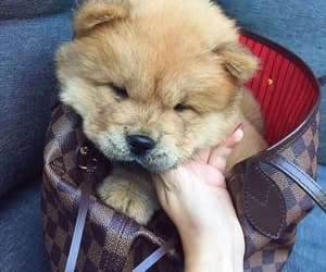blogger, puppy, and chow chow image