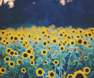 sunflowers, woods, and summervibes image