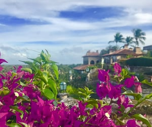 Dominican Republic, flowers, and punta cana image