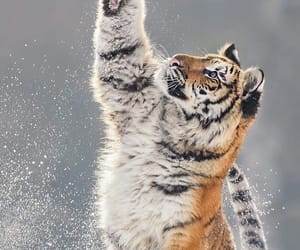 animals, winter, and claws image