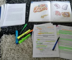 anatomy, Collage, and medical image