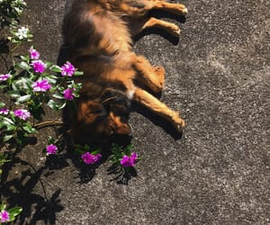 dog, flowers, and honey image
