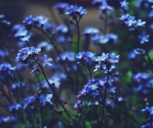 blue flower, blue flowers, and nature image
