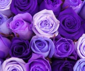 beautiful, bouquet, and plenty image