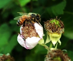 bee, flower, and flowers image