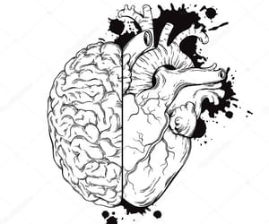 brain, inspiration, and heart image