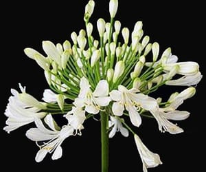 wholesale flowers online and wholesale fresh flowers image