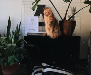 aesthetic, decoracao, and gato image