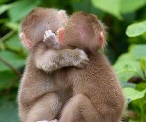 animals, monkey, and baby image