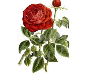 etsy, pink rose, and vintage floral image