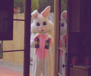 animal, bunny, and random image