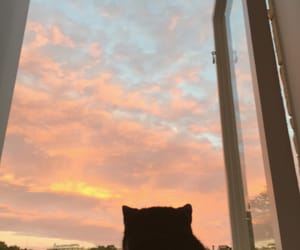 cat, clouds, and evening image