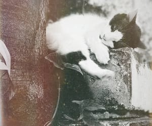 cat, vintage, and kitten image