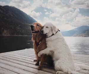 dog, animal, and hug image