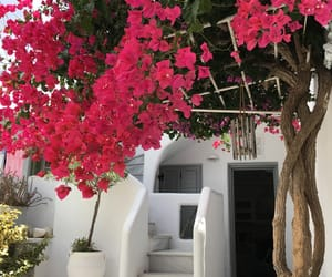 beautiful, flowers, and Greece image