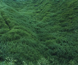 green, nature, and grass image