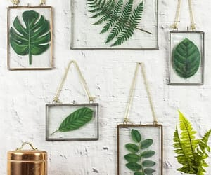 aesthetic, fern, and frames image