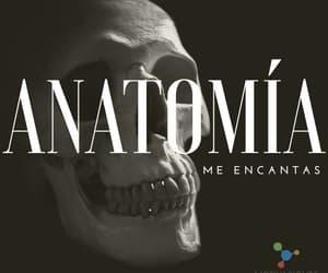 anatomia, doctor, and Estudio image