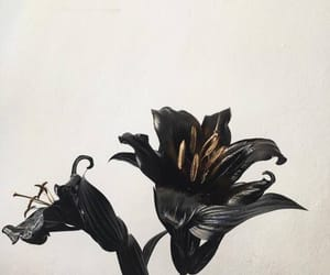 flowers, aesthetic, and black image