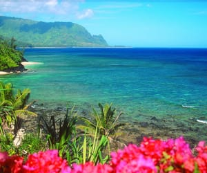 beach, flowers, and hawaii image