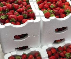 strawberry, food, and FRUiTS image
