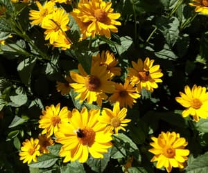 flowers, garden, and yellow image