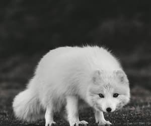 aesthetic, black and white, and animals image