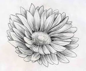 drawing, flower, and flowerpower image