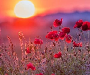 flowers, sunset, and sun image