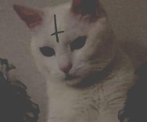 cat, cats, and Devil image