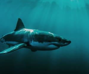 shark, wallpapers, and tiburon image