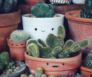 blue, cactus, and flower image