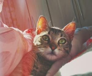 cat, castiel, and love image
