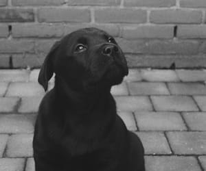 animal, black and white, and cute animal image