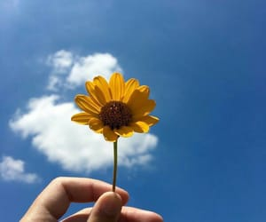 flowers, sky, and yellow image