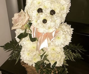 bear, flowers, and gift image