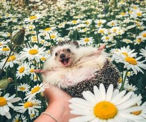 flowers, cute, and hedgehog image