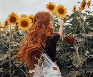 beautiful, girassol, and flower image