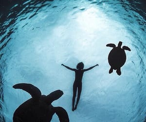 turtle, ocean, and sea image